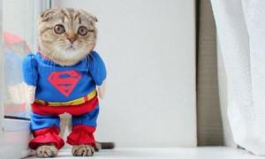 """Кошка спасала """"тонущую"""" хозяйку в ванной"""