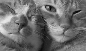 Хозяин убил двух котов во время скандала с женой