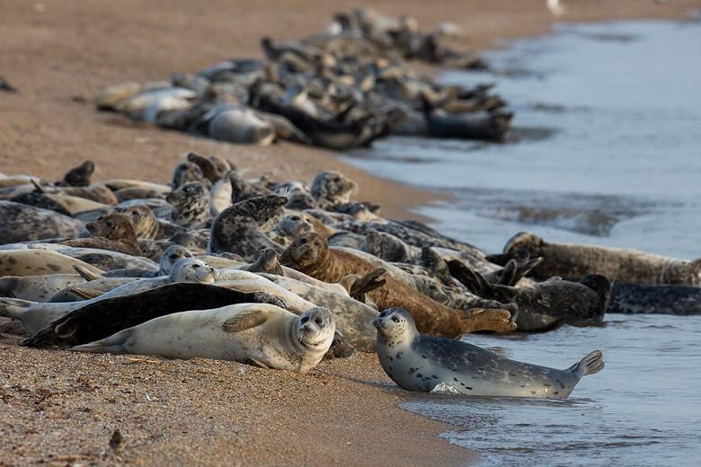 Мертвых тюленей обнаружили на берегу Каспийского моря