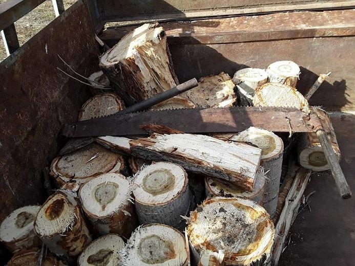 Житель ВКО срубил дерево и лишился трактора