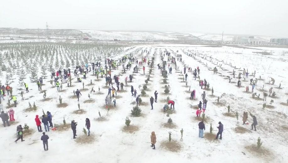 Алматының Алатау ауданында 470-тен астам қылқан жапырақты ағаш көшеті отырғызылды