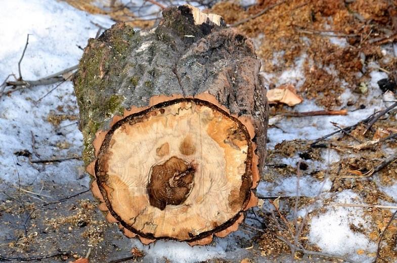 Штраф за вырубку деревьев в Казахстане: Сенат одобрил ужесточение наказания