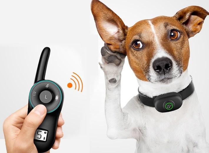 Невероятно, но факт: переводчик собачьего лая создали в Южной Корее