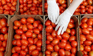 Опасные помидоры: Россия вводит запрет на поставку томатов и перца из Казахстана