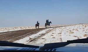 Житель Туркестанской области организовал кокпар на 100 человек вопреки запретам