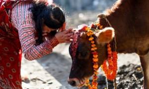 Наука о коровах: необычный экзамен ввели для школьников и студентов