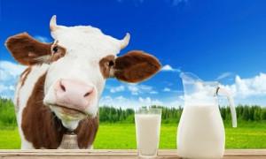 Лайфхак: сходить за молоком или что продают в наших магазинах