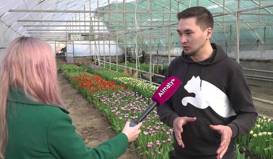 Алматинец хочет создать новые сорта тюльпанов и назвать их в честь знаменитых казахстанцев