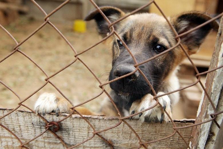 Видео мертвых собак возмутило зоозащитников в Уральске