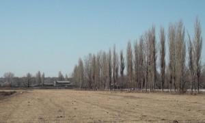 """Земельный скандал: сотрудники """"Правительства для граждан"""" оформляли земельные участки на имя своих родственников"""