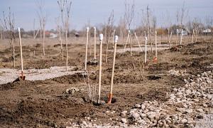 200 саженцев посадили на Аллее женщин в Алматы