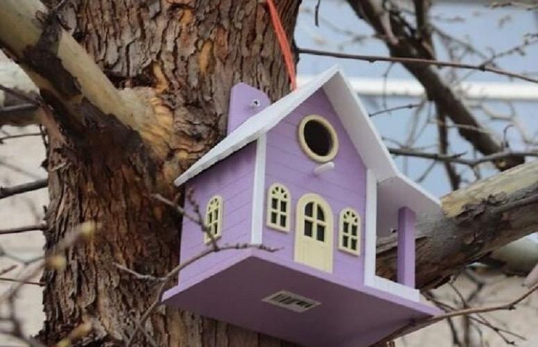 VIP-скворечник для птиц появился в Шымкенте