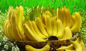 Под угрозой исчезновения: жители Земли могут остаться без бананов