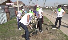 Туған жеріңді түлет: Наурызбай ауданында 300 түп ағаш отырғызылды