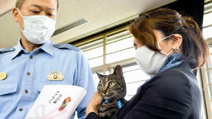 Очевидное - невероятное: в Японии начальником полиции назначили кошку