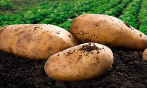 Накормил картофелем до смерти: житель Павлодарской области лишился свободы на 15 лет