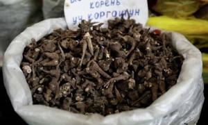 Иссык-кульский корень против COVID-19: в Кыргызстане лечат коронавирус опасным для жизни средством