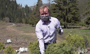Спасти и сохранить природу: в горах Алматы высадили 3000 молодых деревьев