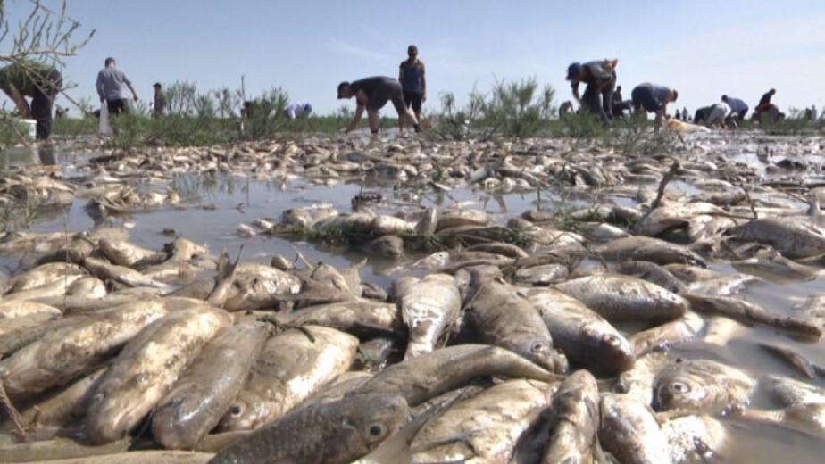 Река вышла из берегов: в Атырауской области пытаются спасти рыбу