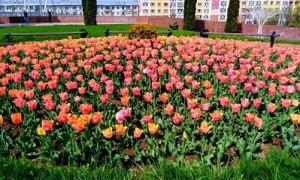 Погода в Алматы с 10 по 16 мая 2021