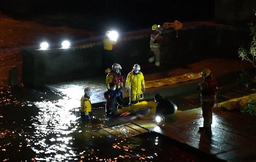 Застрял в Темзе: молодого кита спасли в Лондоне