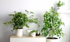 Названы комнатные растения, способные уничтожать вредные бактерии