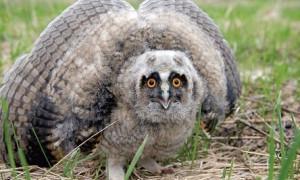 Ученые бьют тревогу: в Восточном Казахстане исчезают птицы