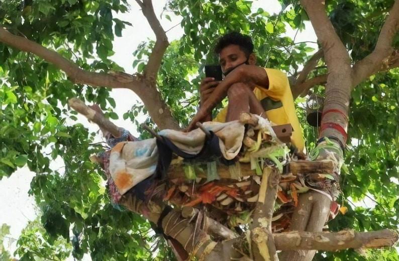 С заботой о близких: заболевший COVID-19 индиец 11 дней прожил на дереве, чтобы не заразить семью
