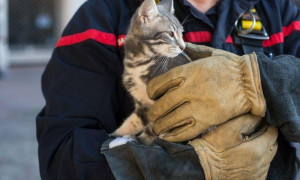 Кошку спасли от гибели пожарные Алматы
