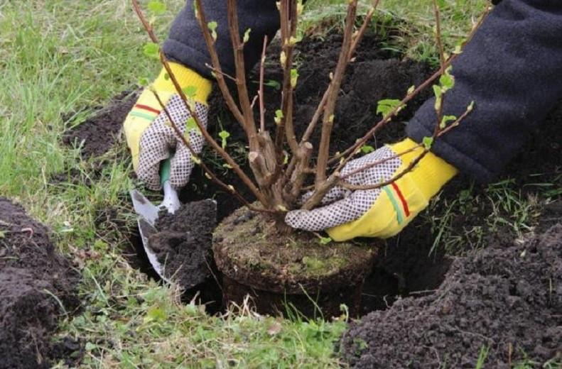 Алматының Жетісу ауданында 8 600-ден астам жас ағаш отырғызылды