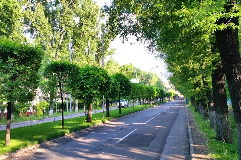 Бакытжан Сагинтаев рассказал о защите зеленых насаждений в Алматы