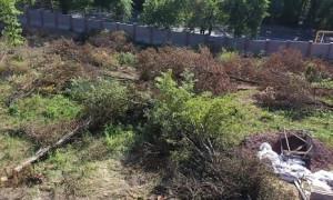 Заңсыз оталған ағаштарға қатысты тергеу: Н. Ливинская жауап берді