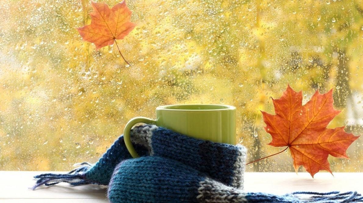 Сезон простуд: что укрепит иммунитет осенью - диетолог
