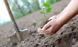 Осенняя посадка деревьев началась в Алматы