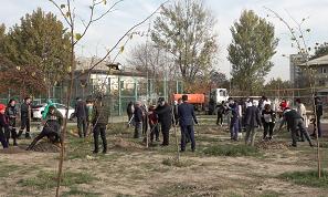 Қарттар айы: Наурызбай ауданында қариялар құрметіне ағаш егілді