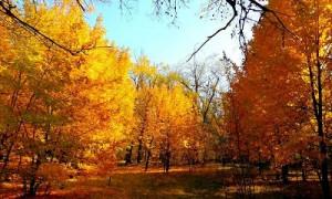 Алматы қаласының 25-31 қазан аралығына арналған ауа райы болжамы