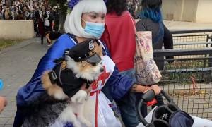 Хэллоуин для собак прошел в Нью-Йорке